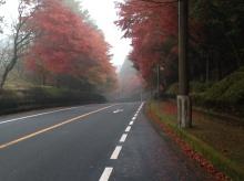 霧島の道路 紅葉